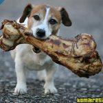 aç köpek