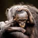 öğr maymun